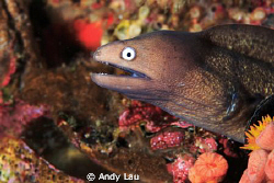 small eel by Andy Lau 